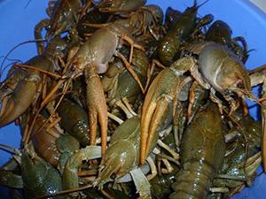 Протягом тижня вилучено майже 56 кг незаконної риби, - Сумський рибоохоронний патруль