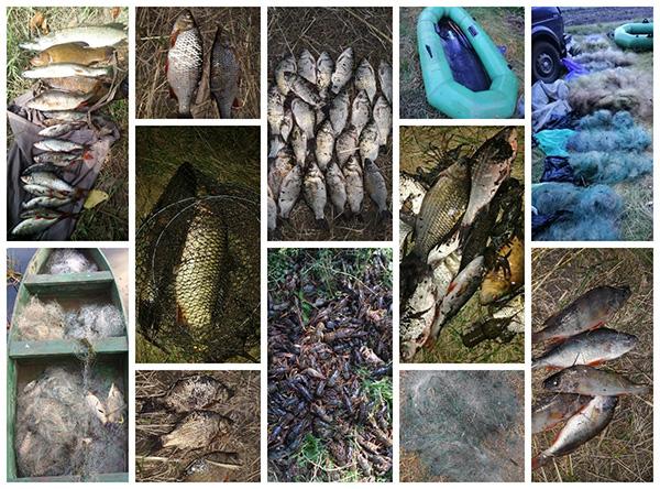 У серпні поточного року вилучено 144 кг незаконної риби та 4200 метрів сіток, - Сумський рибоохоронний патруль
