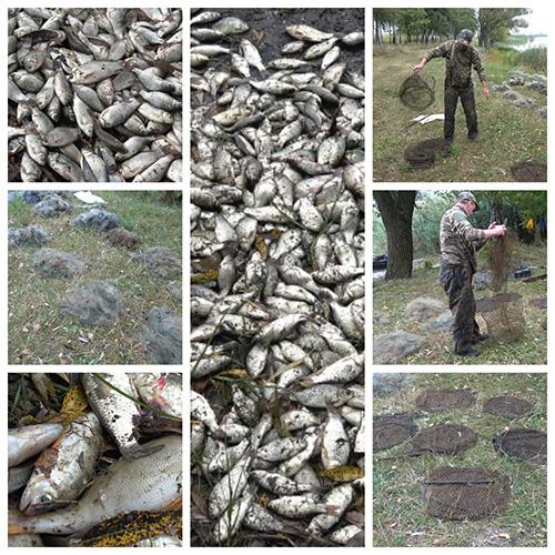 На Охтирщині вилучено 2 100 метрів сіток та 21 од. «ятерів», - Сумський рибоохоронний патруль